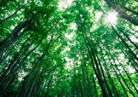 forest_iStock_000010600693Small.jpg